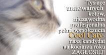 http://images43.fotosik.pl/38/47b1a8ed374756a8.jpg