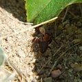mrówczy żywot #mrówki #przyroda