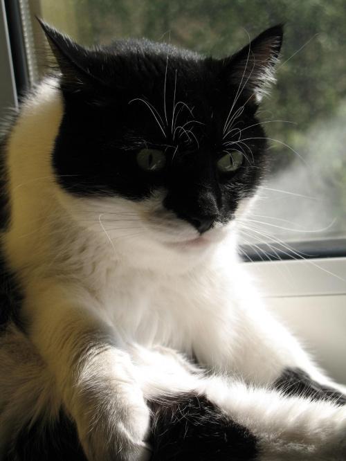 zdjęcie brzydkie,ale kicik ma śmieszną minę #kotek