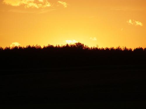 Las o zachodzie słońca #Zachód #słońce #ZachódSłońca #las #cień #niebo
