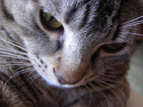 Znowu kot :-) #kot #kocur