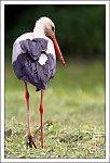 http://images43.fotosik.pl/5/c6c914eac87d2589m.jpg