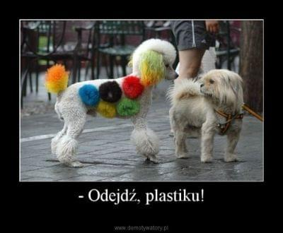 http://images43.fotosik.pl/508/c6ce459a26733e25.jpg