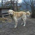 rysiu #zwierzęta #pies #pieseczek #dog
