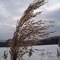 Wietrzne pozdrowienia... #zima #wiatr #gałązka