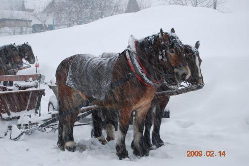 Kulig :) tzn :D konie :D #koń #zima
