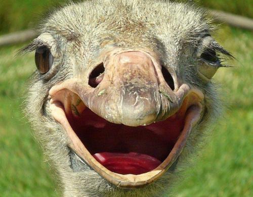 uśmiechnij się :)) Jutro będzie lepiej :)) #ptaki #uśmiech #struś #portret