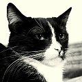 Moje kochanie :) #Salsa #kot #zwierze