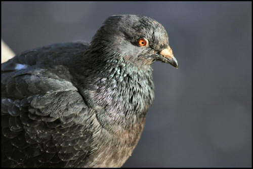 ptaszek #ptaki #natura #przyroda #makro