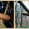 Z lampą i bez - jeżeli nie ma różnicy to po co... #inaczej #szyszka #las