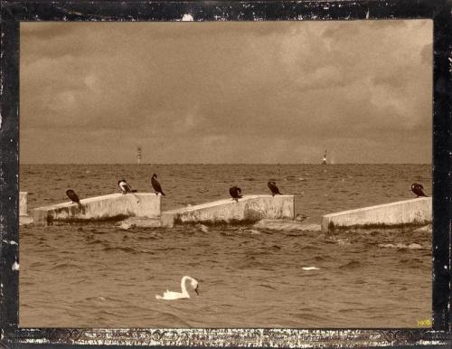 dawna pocztówka-początek jesieni na falochronie #przeróbki #inaczej #StaraFotografia #falochron #kormorany
