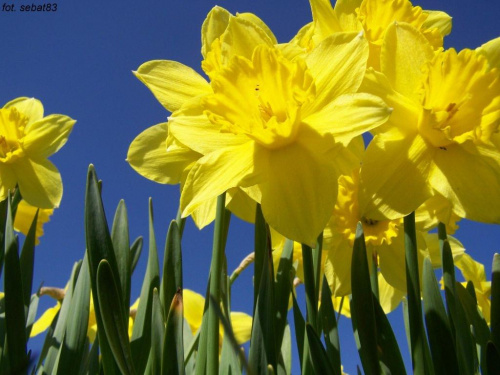 #kwiaty #wiosna