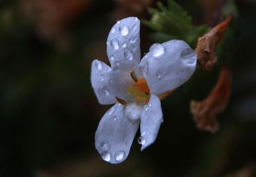 #Kropelki #Kwiatek #Makro